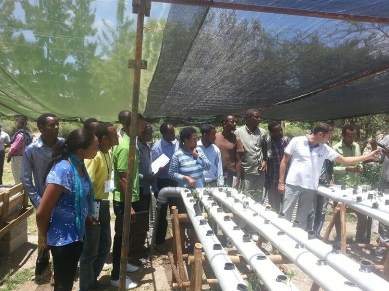 Urban agriculture in developing countries