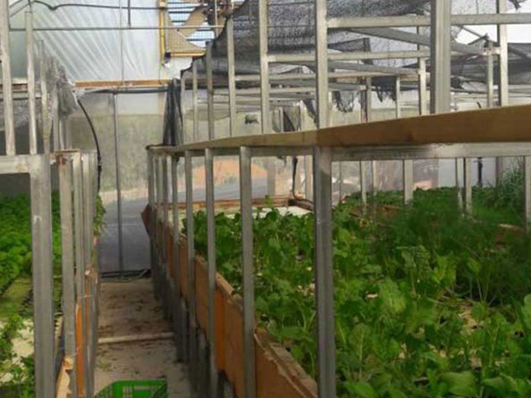 A family hydroponic farm