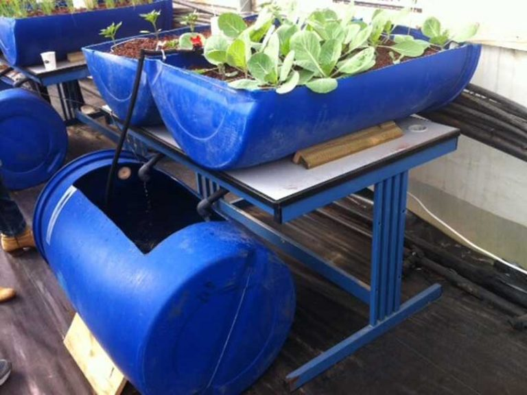 Aquaponics system using barrels