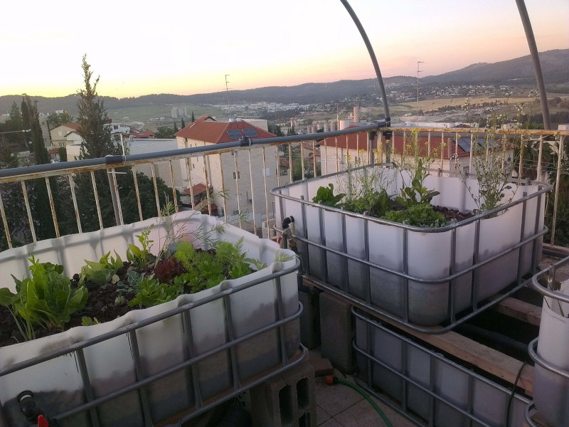 Aquaponics system in a rooftop garden