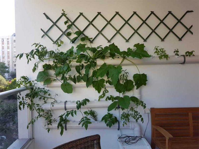 Hydroponics garden on a balcony