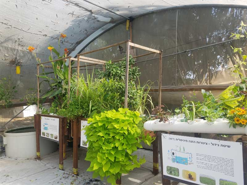 Aquaponics system in a greenhouse