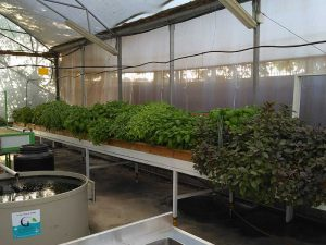 Schools growing vegetables