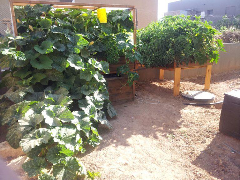 rooftop aquaponics garden