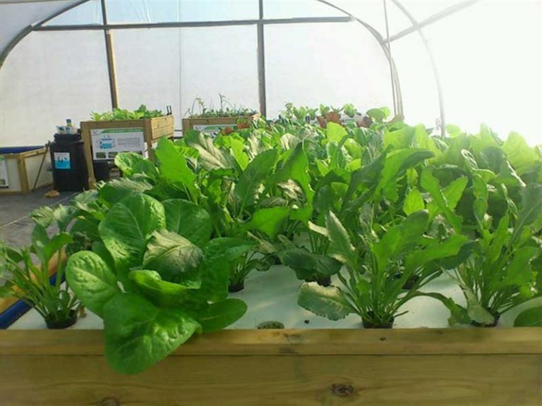 Educational greenhouse for hydroponics