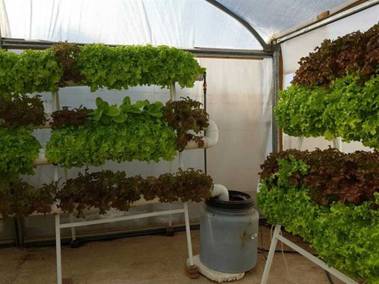 Urban agriculture course in high school