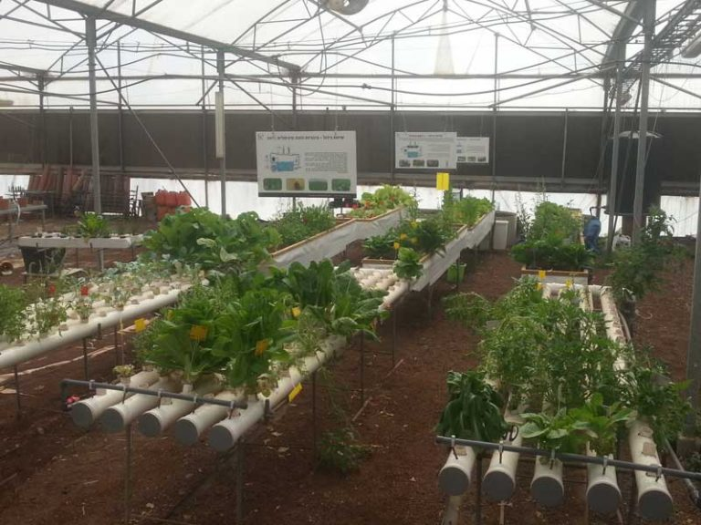 Hydroponics in early childhood education