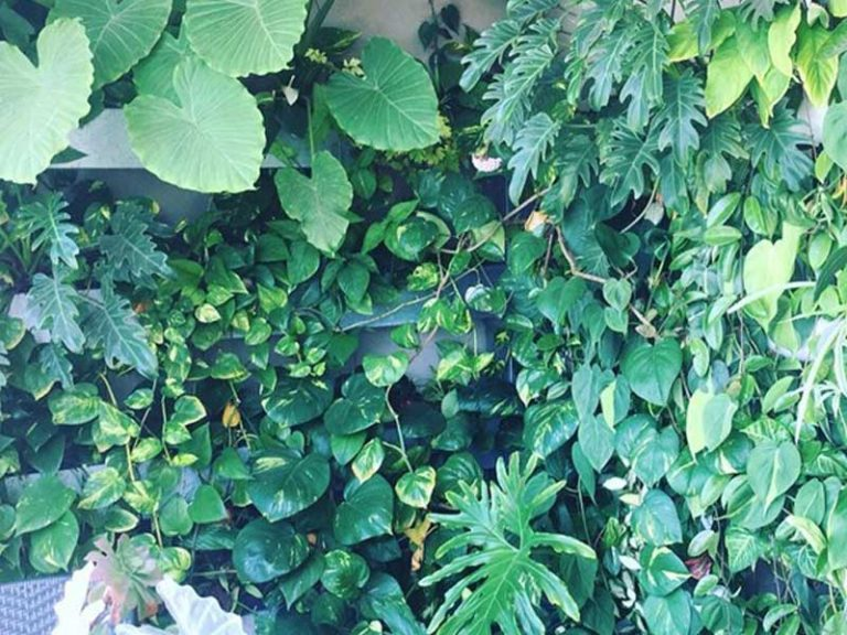 A green wall with tropical plants