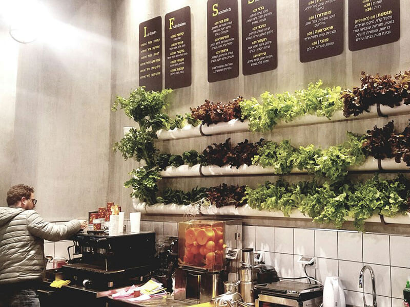 NFT Vertical Hydroponic system in cafes
