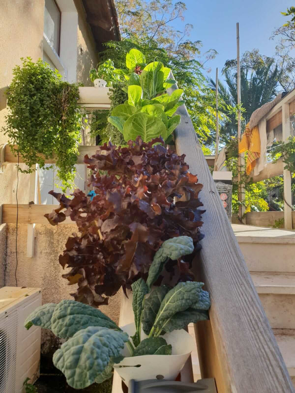 Hydroponic garden on the staircase rail