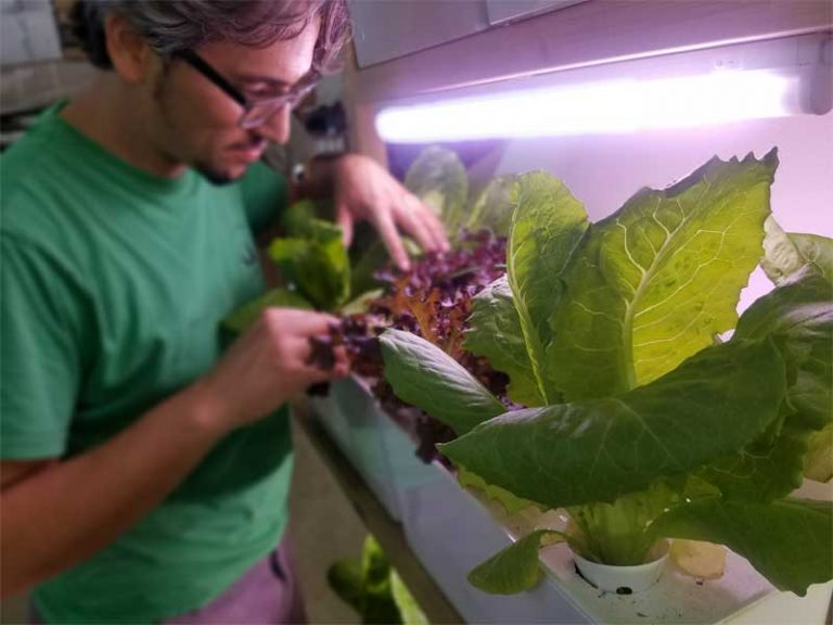 Indoor farming with LED lights