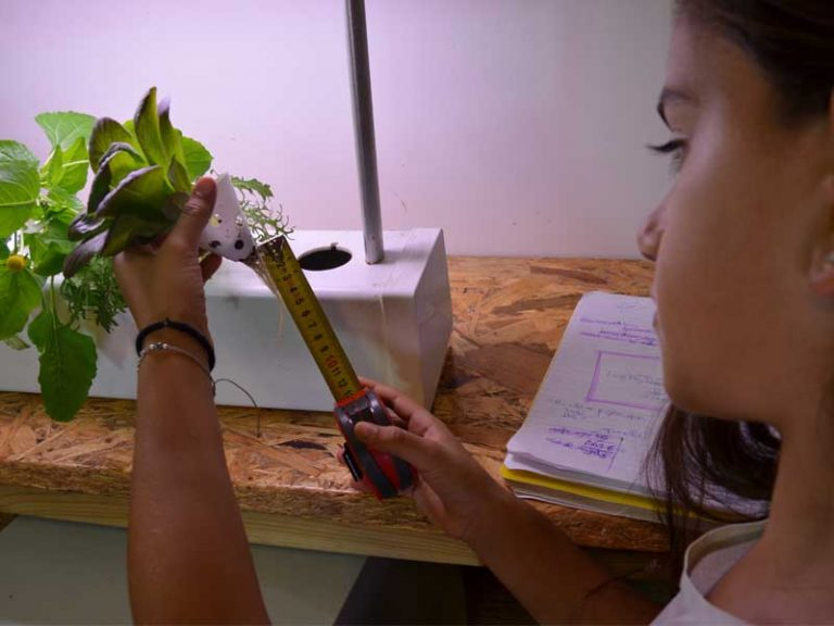 Monitoring plant growth in the classroom hydroponics system