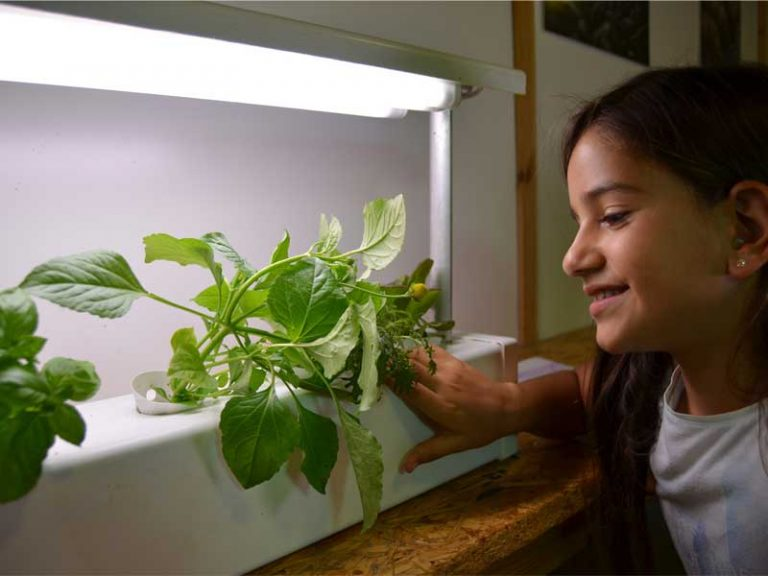 Indoor hydroponics for your home