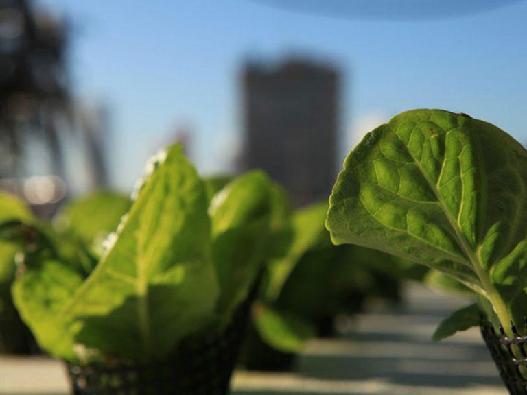 'Green in the City' Farm