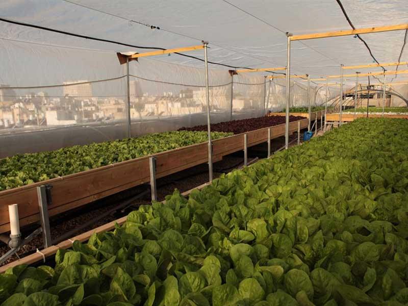 Rooftop hydroponics farm in Tel Aviv
