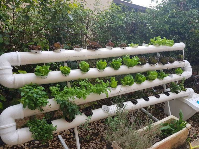 Feed your family with a hydroponics garden in your backyard