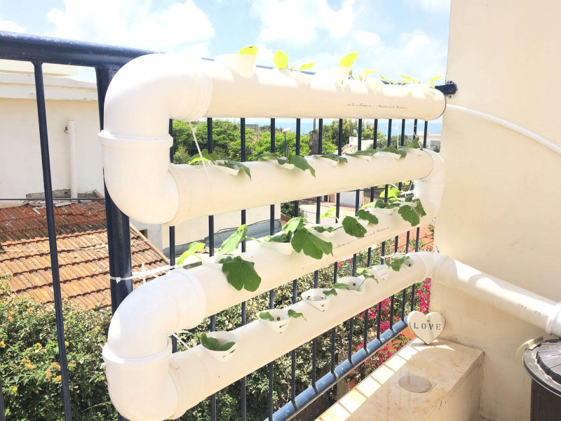 Vertical hydroponics garden on the balcony railing