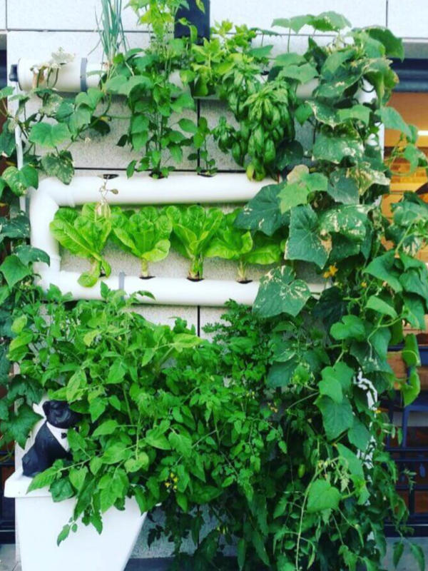 Vertical hydroponics on the wall