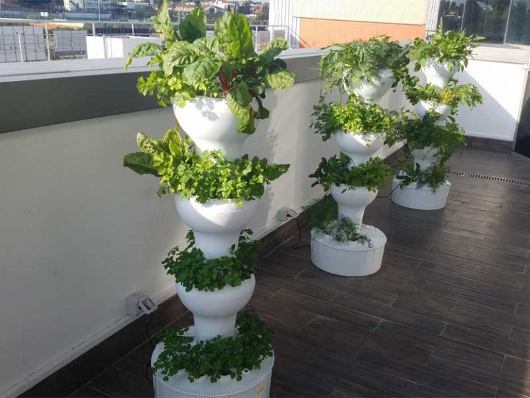 Hydroponics growing tower on a balcony