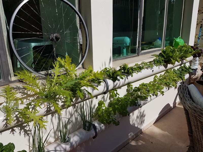 Urban garden on a balcony
