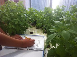 Students studying aquaponics