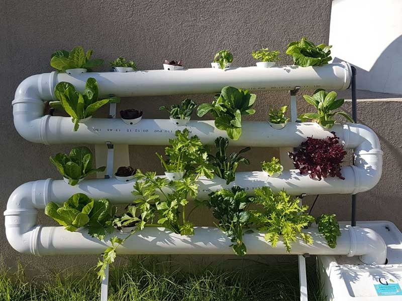 Salad greens growing in NFT hydroponics vertical garden