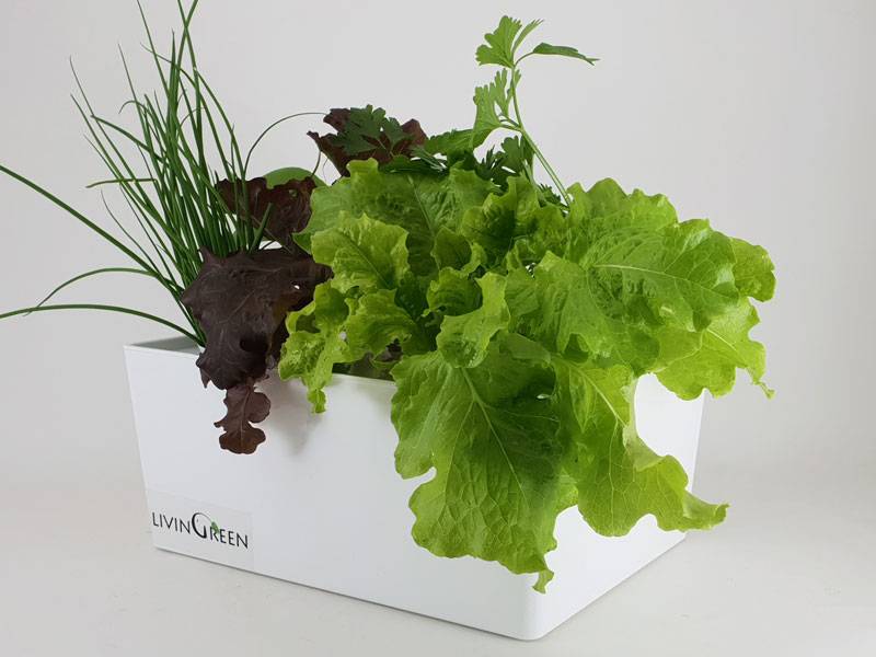 Grow your own salad greens with GreenBox hydroponic system