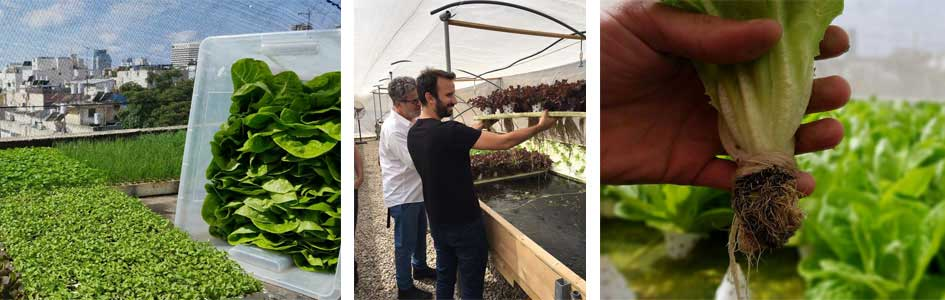Rooftop hydroponics farm