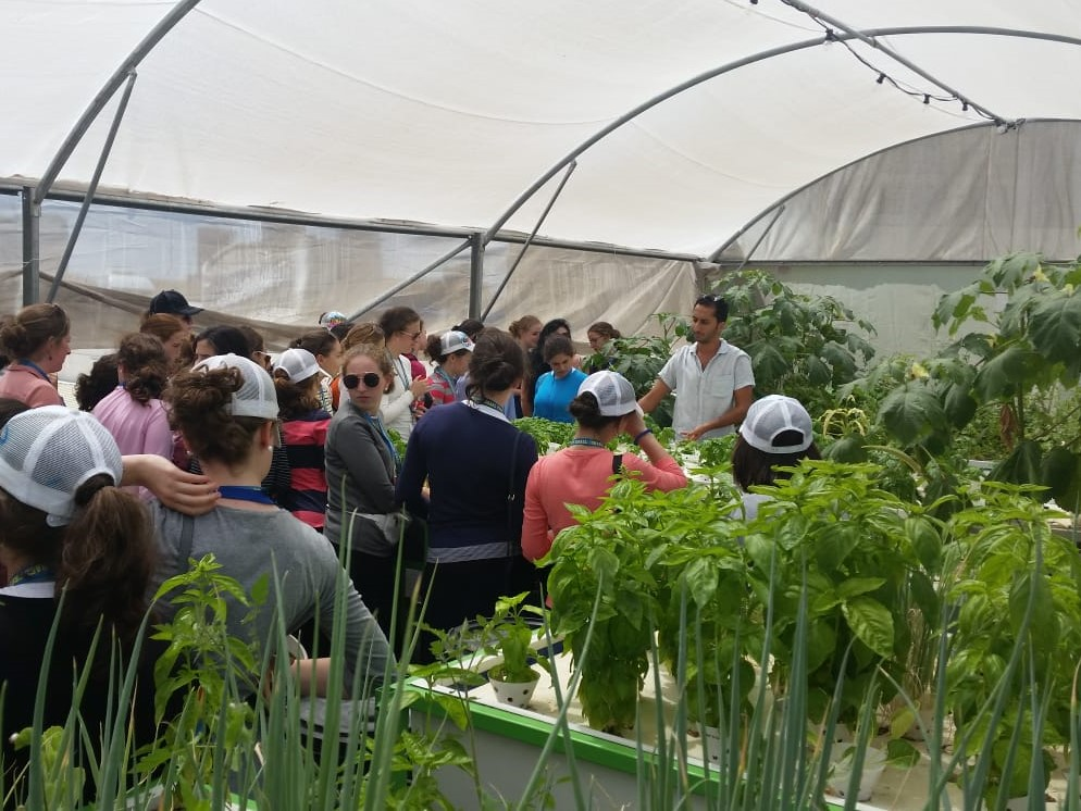 Take a tour at Tel Aviv's first rooftop farm