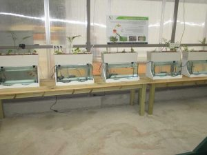 Aquaponics project for high school students