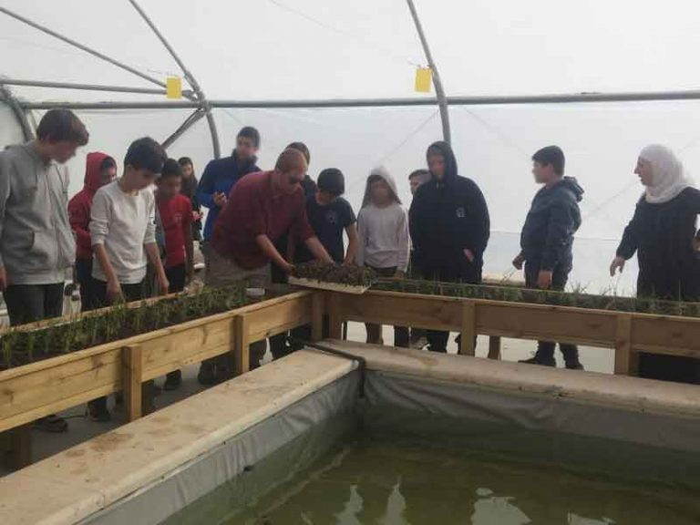 Aquaponics project in science class