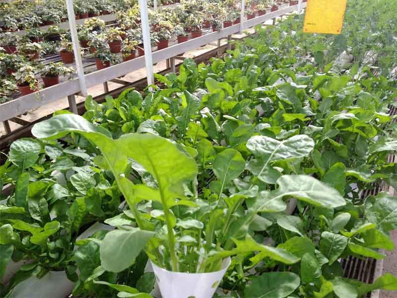 Educational greenhouse