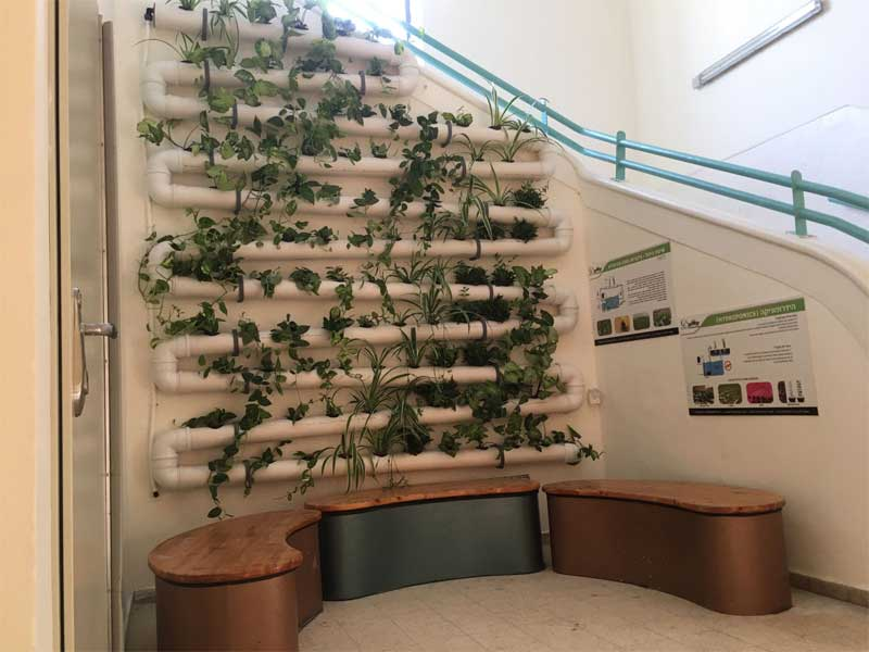 Natural air purification system in school