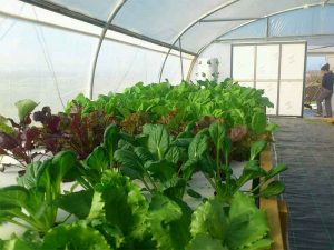 Empower your community through sustainable farming