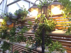 Vertical hanging farm in restaurant