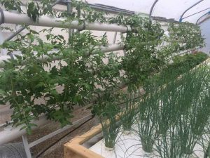 Hydroponic gardening for natural rehabilitation