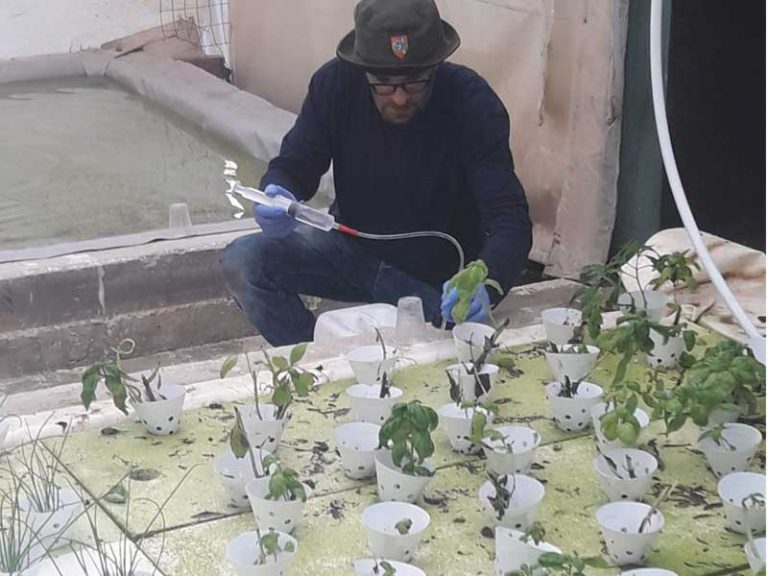 Hydroponics in the Galilee