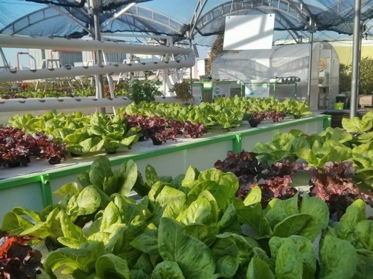 Rooftop hydroponic farming in the city
