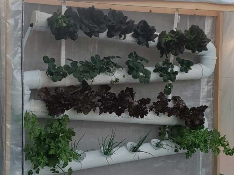 Grow vegetables on hanging hydroponics system