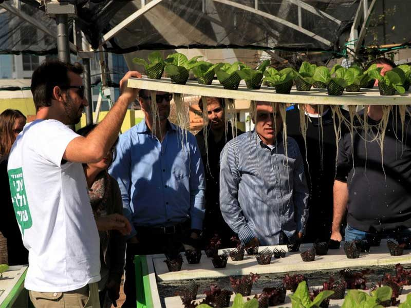 Commercial hydroponics workshop